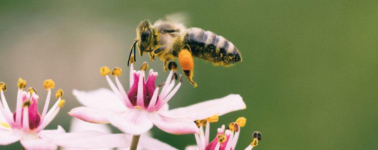 location de ruche en entreprise